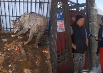 Фото: кадры из видео
