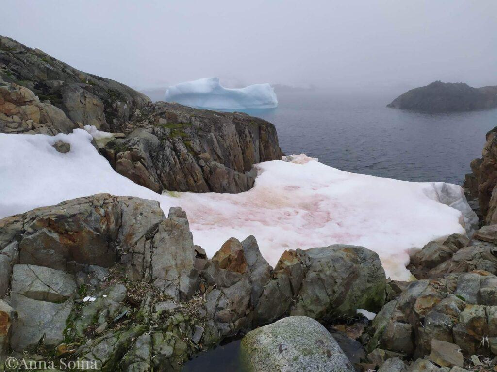 Снег в Антарктиде окрасился в зеленый и малиновый цвета 1