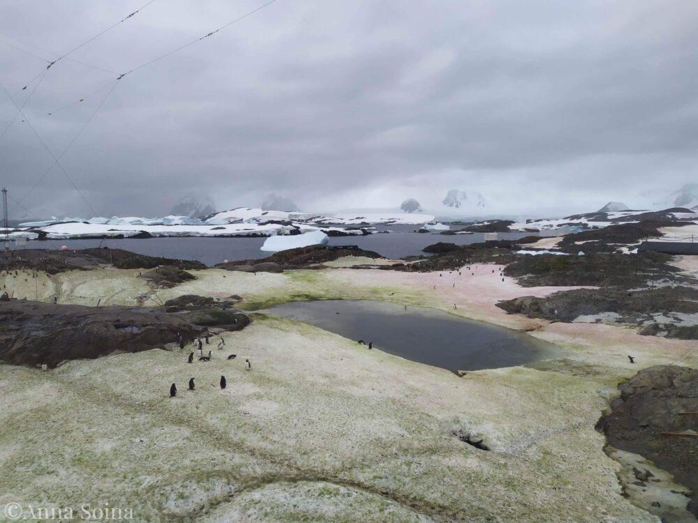 Снег в Антарктиде окрасился в зеленый и малиновый цвета 2