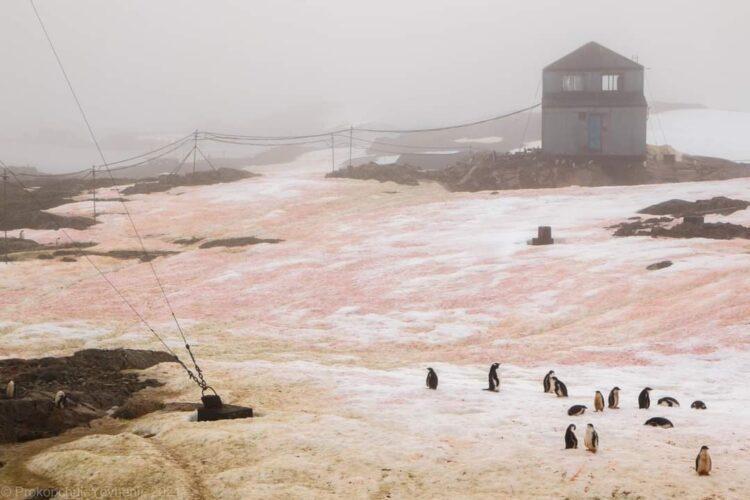 Фото: Национальный антарктический научный центр
