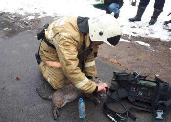 Спасатели откачали кота после пожара в многоэтажке Алматы 1