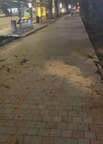 Дерево упало на женщину в Алматы 1