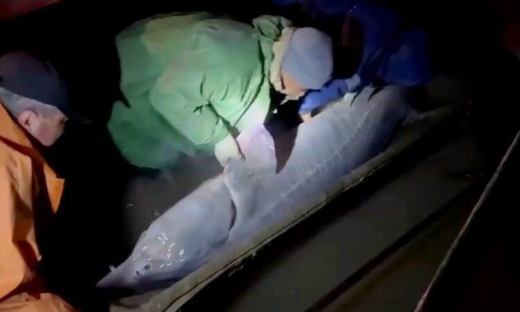 Фото: скриншот с видео Комитета рыбного хозяйства