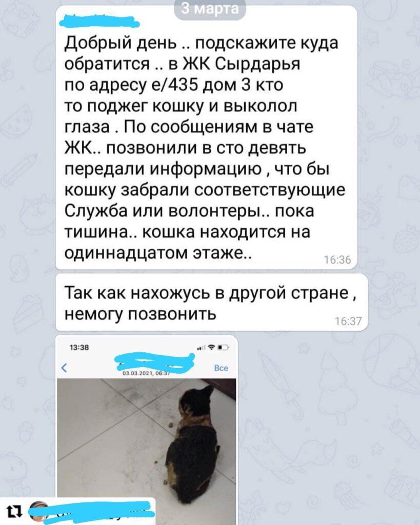 В Нур-Султане живодеры заклеили глаза коту и бросили его в огонь 1