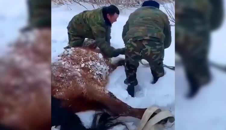 Курсанты МЧС Казахстана спасли замерзшую лошадь от гибели 1