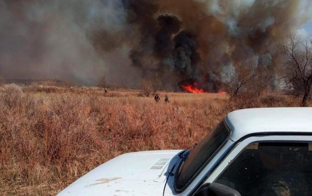 Пожар охватил огромную площадь с лесами и камышом в Алматинской области 1