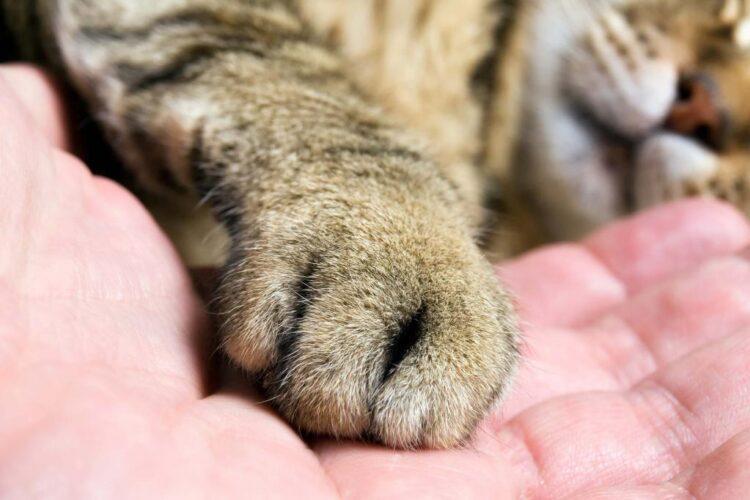 Фото: doctor-veterinar.ru