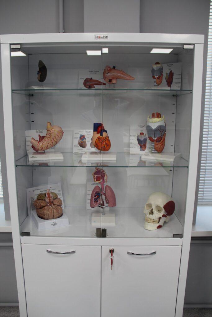 Уникальный анатомический музей получили алматинские студенты и врачи