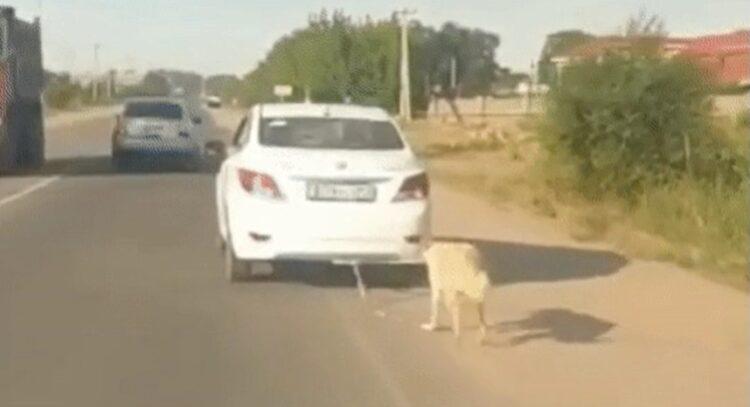 Неравнодушные алматинцы отбили у живодера собаку, привязанную к машине 1