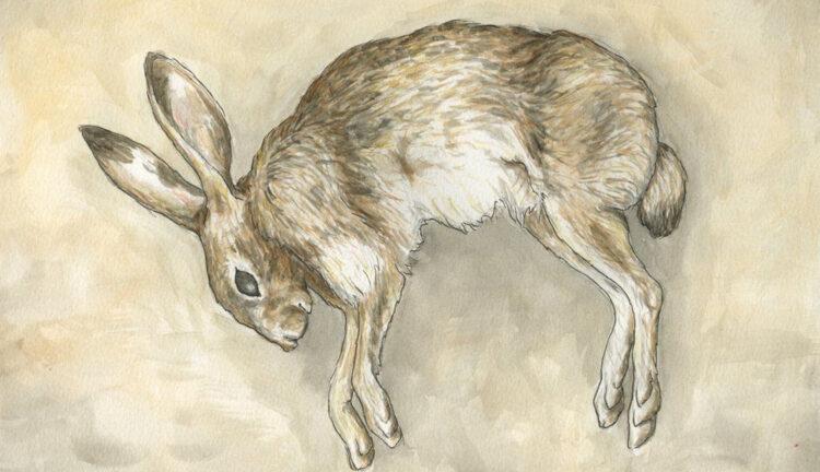 Мертвый заяц распугал посетителей парка в Жаркенте 1
