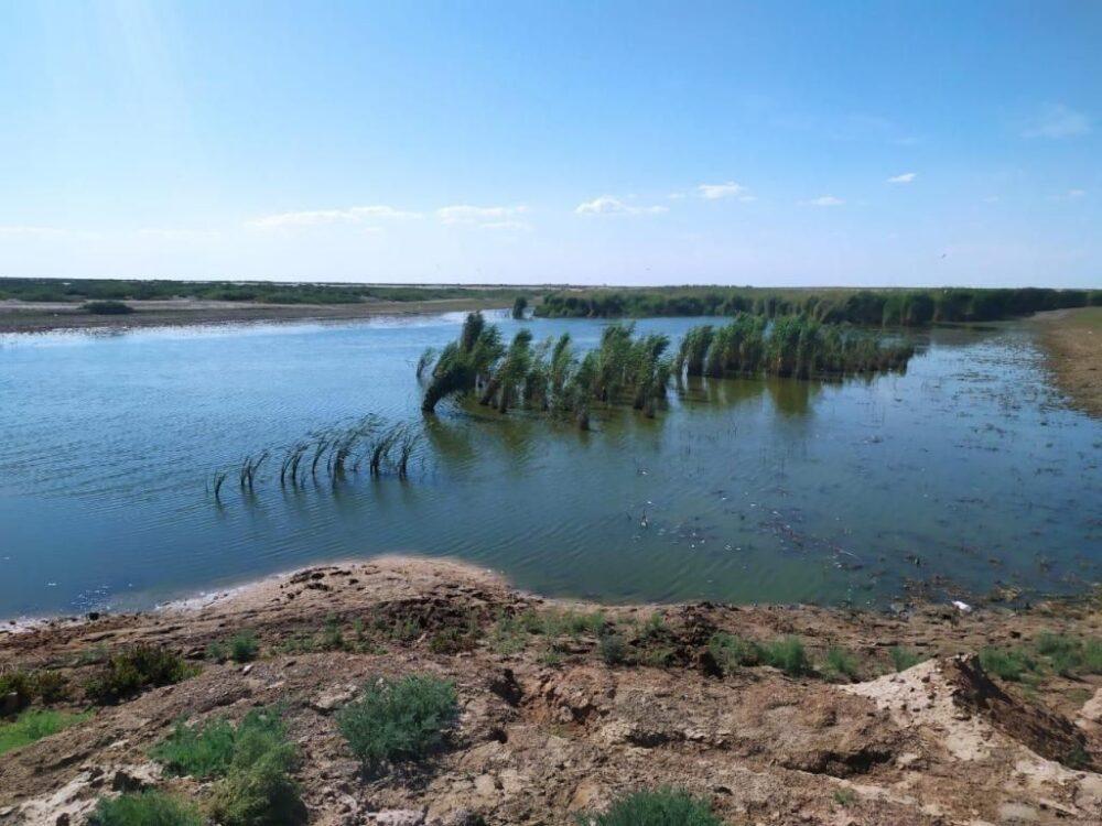 В водоеме в Атырауской области нашли два центнера мертвой рыбы. Им не хватило кислорода 1