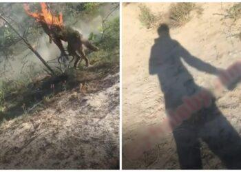 Казахстанец привязал и заживо сжег собаку, снимая все на видео 4