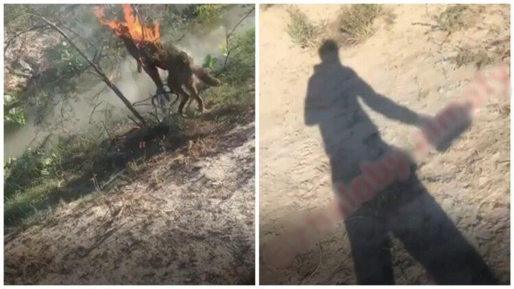 Казахстанец привязал и заживо сжег собаку, снимая все на видео 1