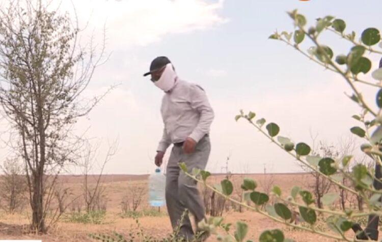 Сад за 46 млн тенге гибнет в Туркестанской области 1