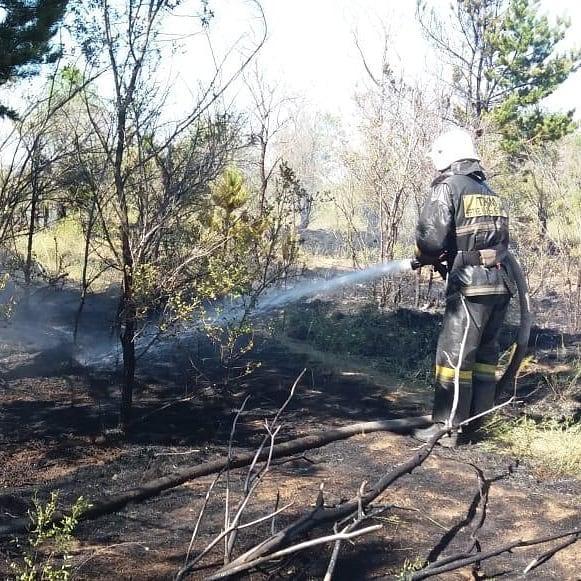 Пожар в лесопосадке: деревья и трава сгорели близ Караганды 1