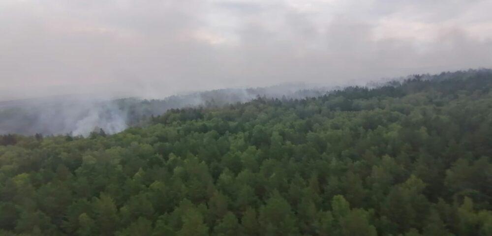 Крупный пожар в СКО: огонь охватил сто гектаров площади лесхоза 1
