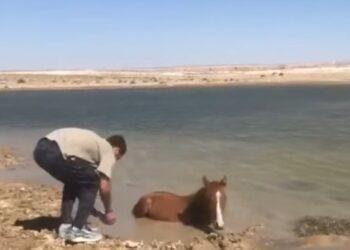 Казахстанцы спасли от гибели увязшую в грязи лошадь 1